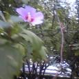 初めての花