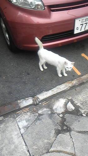 駐車場の白猫
