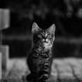 瞳 福山市K町の猫№25