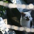 立秋過ぎても・・・ 尾道の猫たち No.24