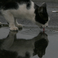 「水 鏡」 鞆の浦の猫たち No.54