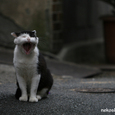 尾道の猫たち No.29
