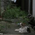 「秋の風感じた」 尾道の猫たち No.39