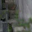 「墓地の片隅で」 尾道の猫たち No.38
