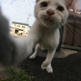 倉敷市の猫たち No.5