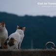 仲のいいメス同士。鞆の浦の猫たちNo.44