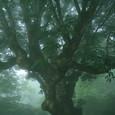 霧の中にたたずむ