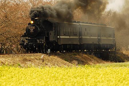 開花直前の桜と菜の花と蒸気機関車