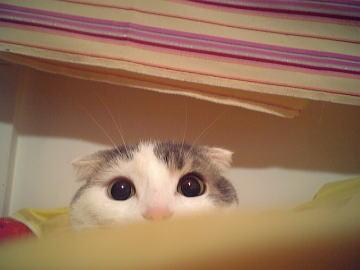 ハンターの目