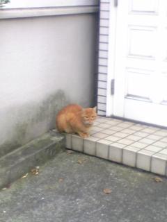 近所の小太郎くん